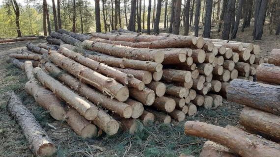 Санитарную рубку леса проведут под Озёрами