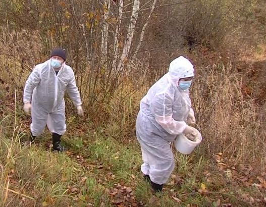 В местах обитания хищников разложили вакцину от бешенства