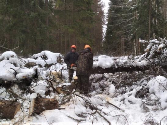 Леса приводят в порядок