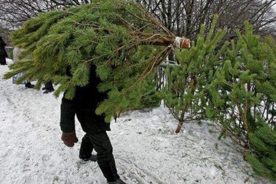 Жителям напомнили, до какого числа можно сдать новогоднюю ель